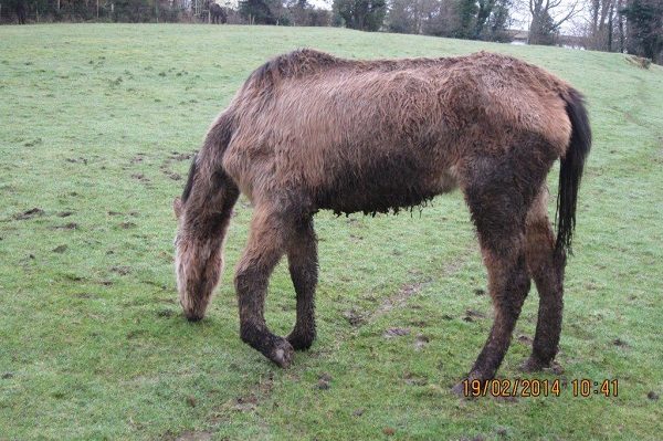 Donegal farmer sentenced after animals on his farm had to be put down