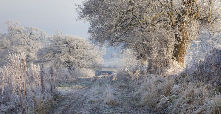 Temperatures set to fall to -4, with severe frost in store this weekend