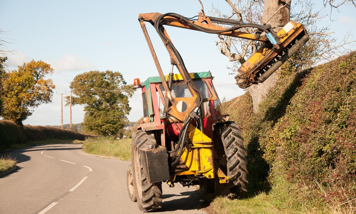 No changes to hedgecutting dates ahead of ban coming into effect