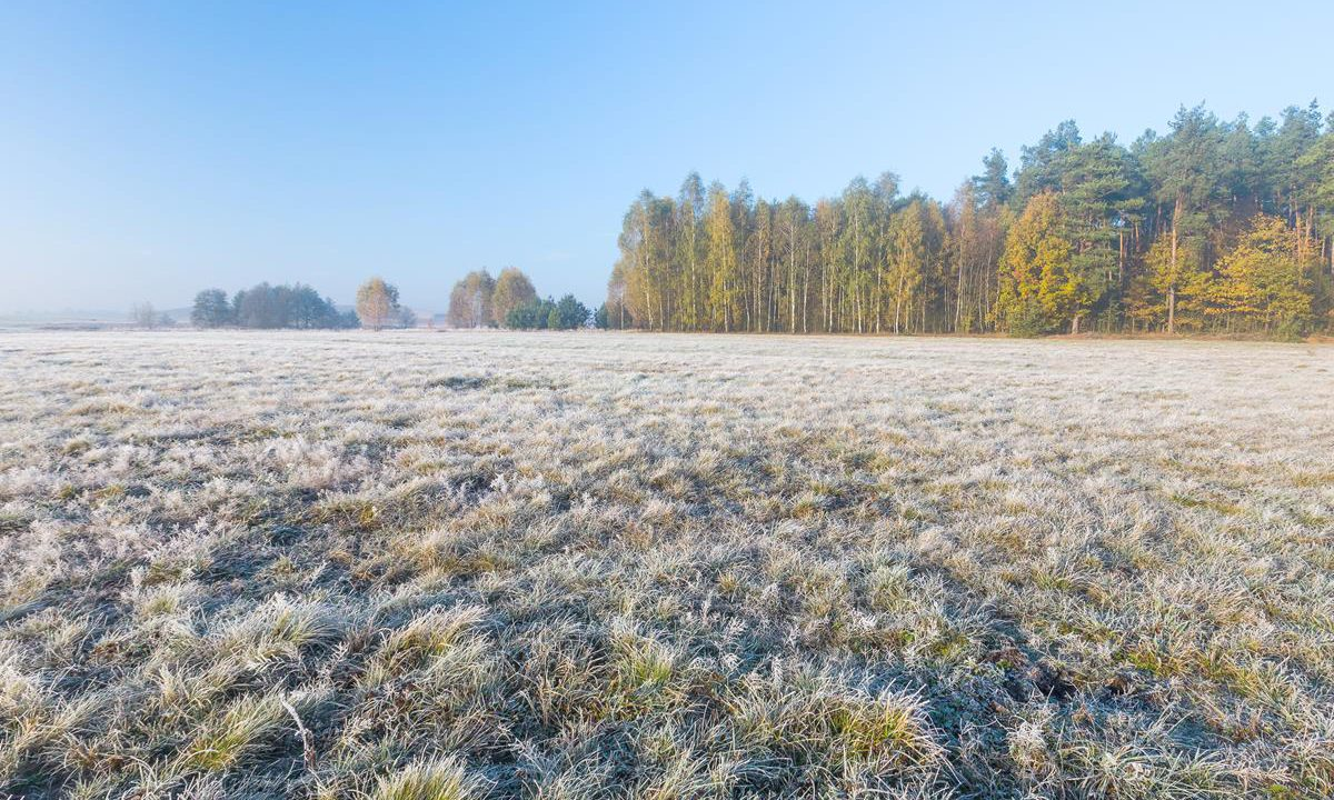 Severe frost in store for parts tonight, but milder weather is on the way
