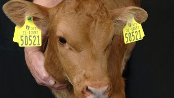Calls made for eradication of 'full scale' BVD testing