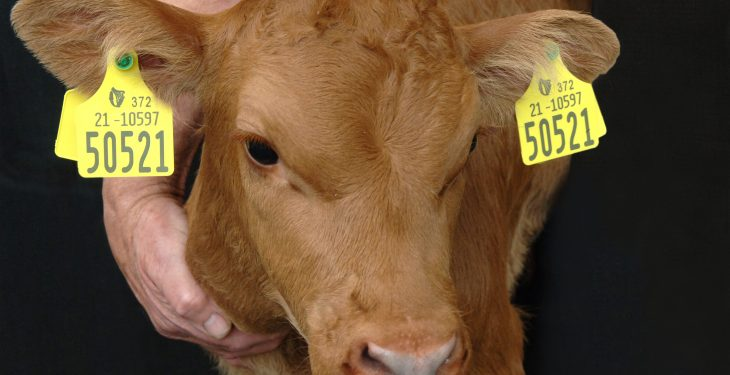 Second supplier approved by Department to supply cattle tags to farmers