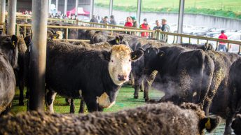 Beef prices stagnate as Christmas buying draws to a close