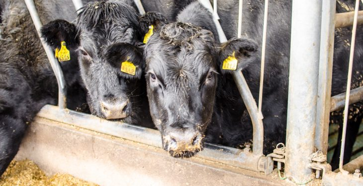 Beef farmers forced to carry the can through loss making prices – Healy