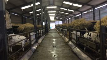 Pics: Behind the scenes on one of Ireland's largest calf farms