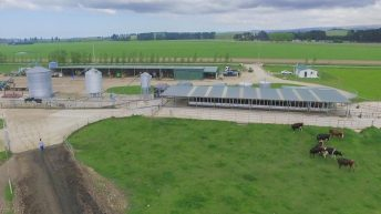 Kiwi dairy operation which milks over 3,000 cows to go under the hammer