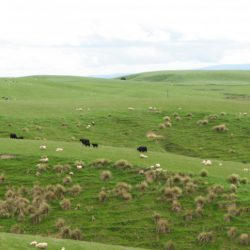 New Zealand's 'largest farmer' to sell off 10 farms