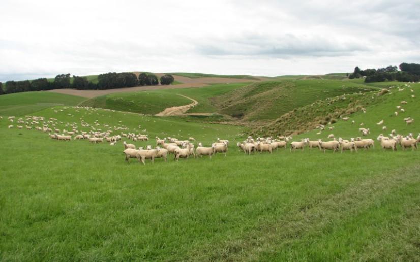 Copper Road Farm Source: PGG Wrightson Estate Agents