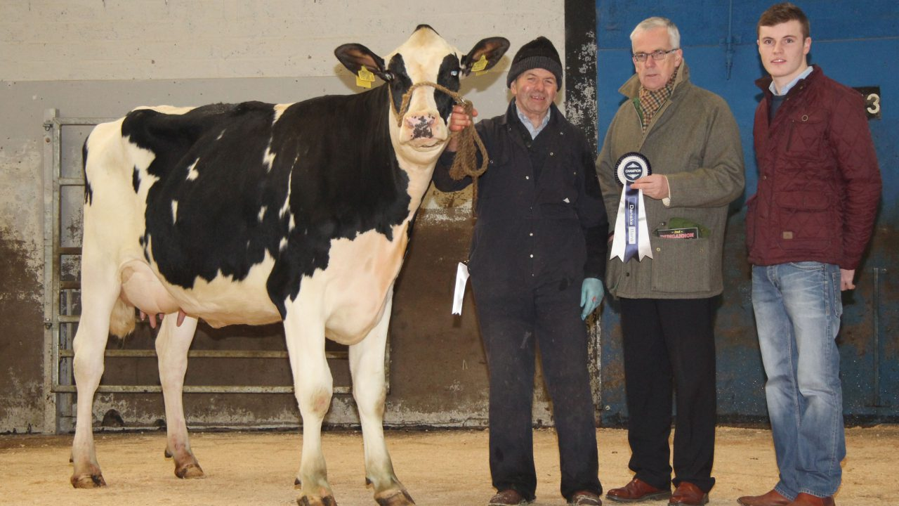 A family of Holstein breeders take home close to €50,000 at dairy sale