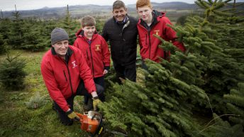 'Buy a real Christmas tree' – the industry is worth €21m to the economy
