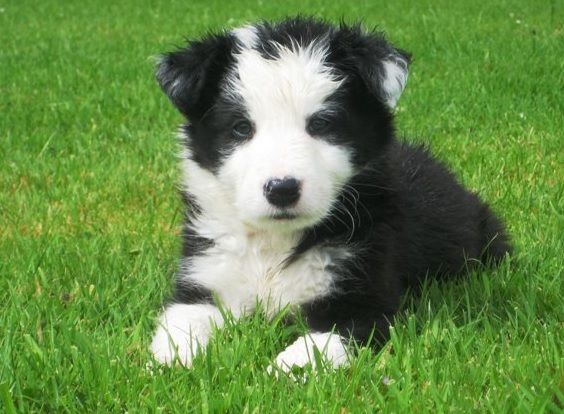 All dogs over 12 weeks of age must be micro-chipped and registered