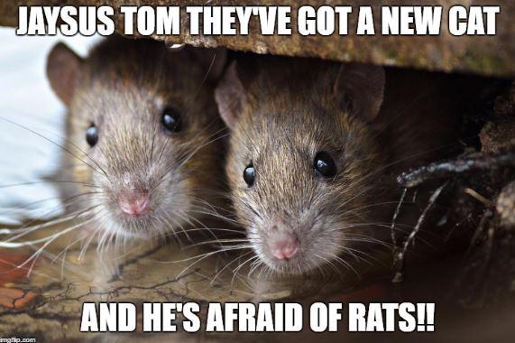 rat-meme