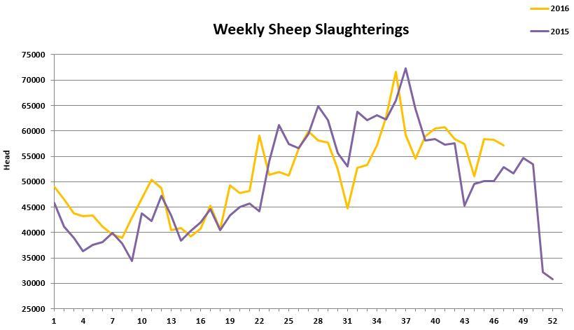 sheep-kill-december