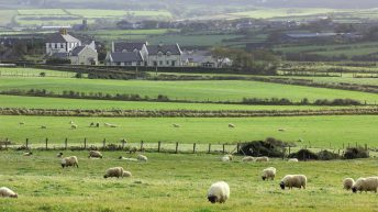 McConalogue called on to address 'lack of focus' in tackling farming challenges