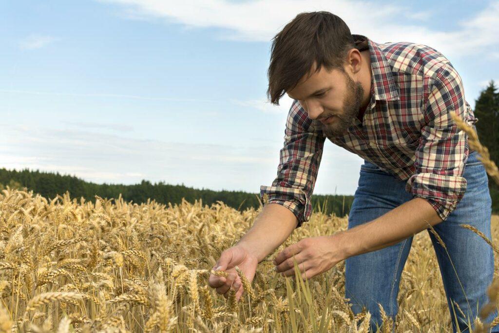 Farmer, Graduate, Agriculture,