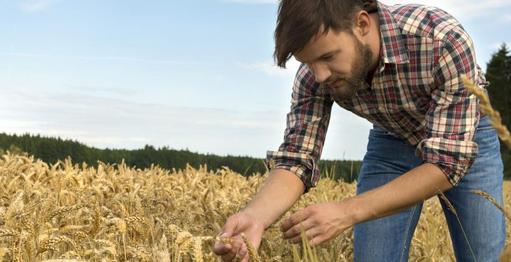 Irish agriculture 'faces a difficult future' unless more young people begin farming