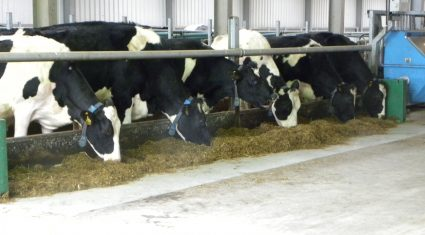 'Ongoing dairy challenges' see no immediate reintroduction of Ornua milk levy