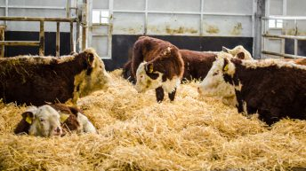 Commissioner Hogan clears the way for funding of new beef producer groups