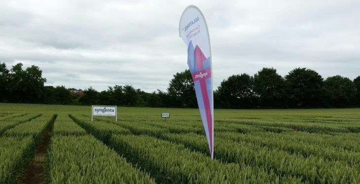 New Syngenta fungicide receives early approval for use in Ireland