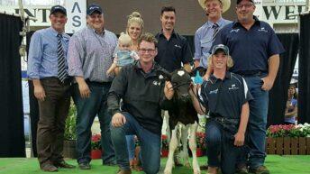 Holstein heifer calf sells for over €175,000 in Australia