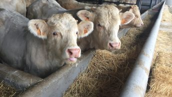Main players in live exports come together as Algerian buyers show interest