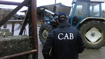 CAB seizes 125 cattle from farmer over unpaid taxes