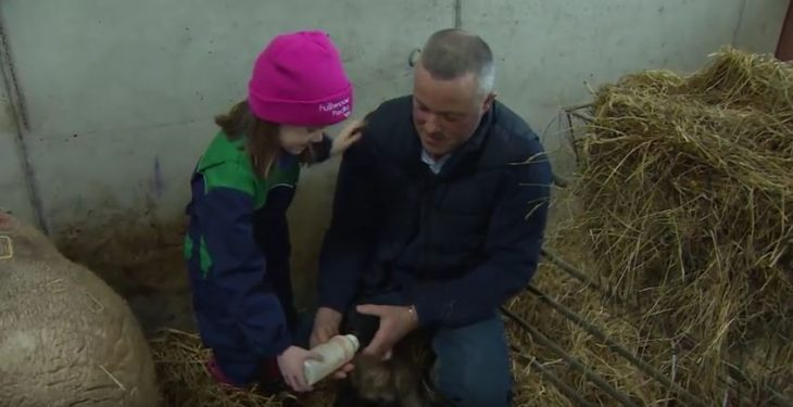 A farmer busy with lambing and calving to feature on Ear to the Ground