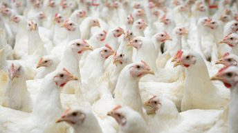 How can you be penalised if you fail to confine your poultry?