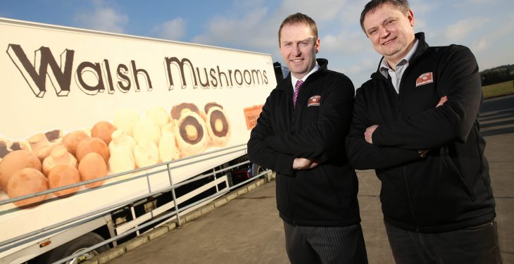 Second largest mushroom supplier to the UK acquires Golden Mushrooms