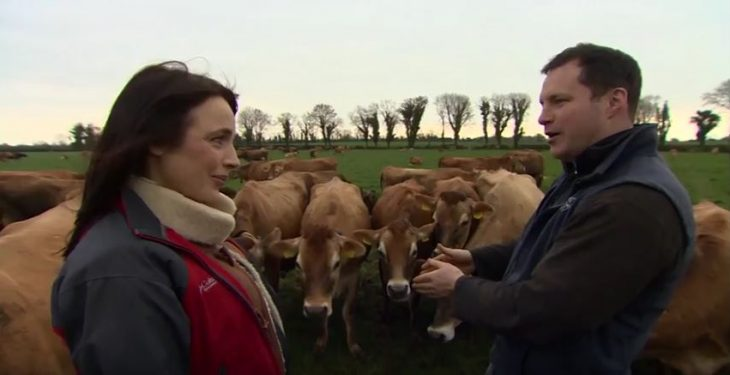 Video: Meet the owner of Ireland's largest herd of pedigree Jersey cows