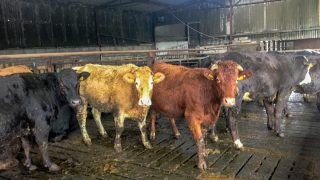 'Harsh reality of beef sector highlighted in EU report'