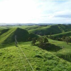 farm, New Zealand