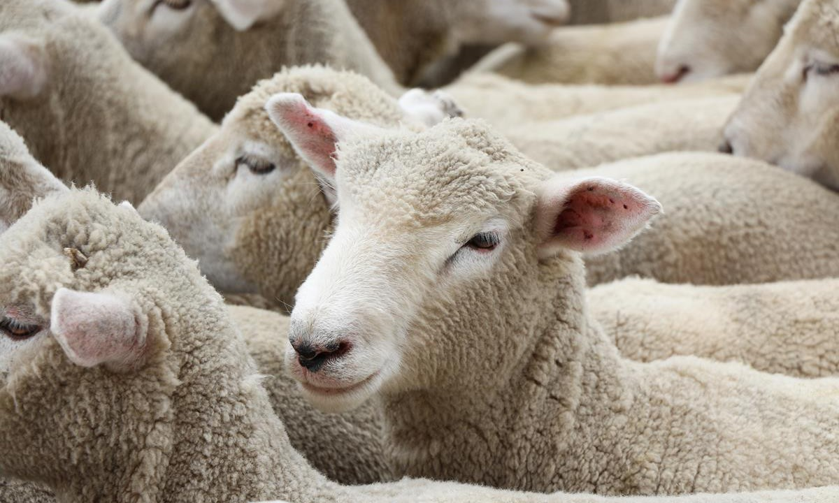 High lamb prices force Australian factories to close