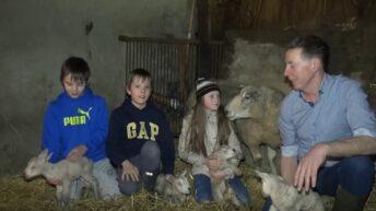 Video: Sheep farmer welcomes quadruplets following tough year
