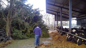 Pics: Orange weather warning issued as Storm Doris hits Irish farms