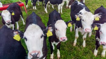 Creed confirms continued supports towards BVD eradication