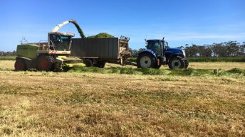 Video: Silage addiction draws one young Irish man to Australia and back