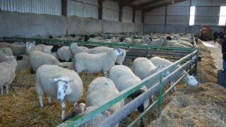 Ban on Irish sheepmeat lifted by Saudi Arabia