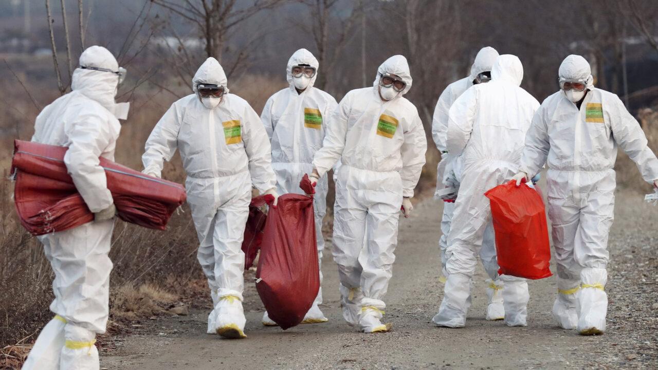 More severe strain of bird flu wreaks havoc in China