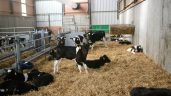 Is replacing straw bedding with mats and rearing calves on plastic slats a viable option?