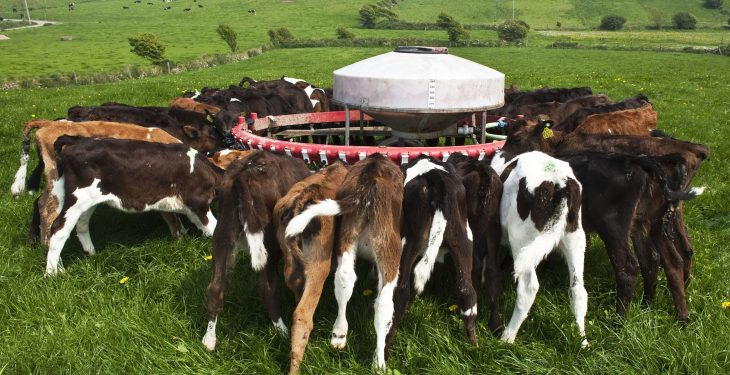 Focusing on the birth-to-weaning period for successful calf rearing