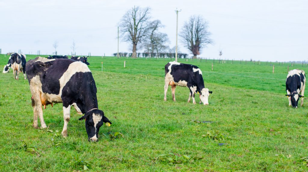 Video: ABCD robotic grazing put to the test under Irish