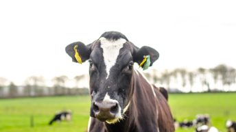 Dairy farm incomes likely to drop by 50% in 2018 – Teagasc