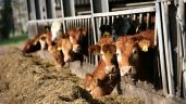 At what rate should you be supplementing your cattle at this winter?