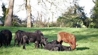Contentious issues remain on eradicating Bovine TB