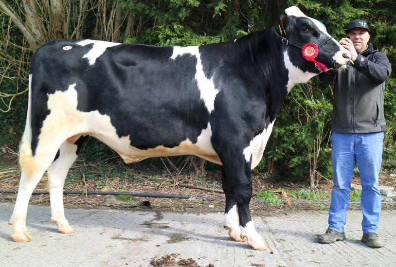 Mountfarna Rangler takes top price at IHFA Premier bull sale