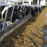 Housing comes early as grazing conditions deteriorate