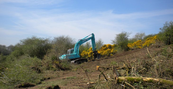 Meath farmer fined for illegal destruction of hedgerows