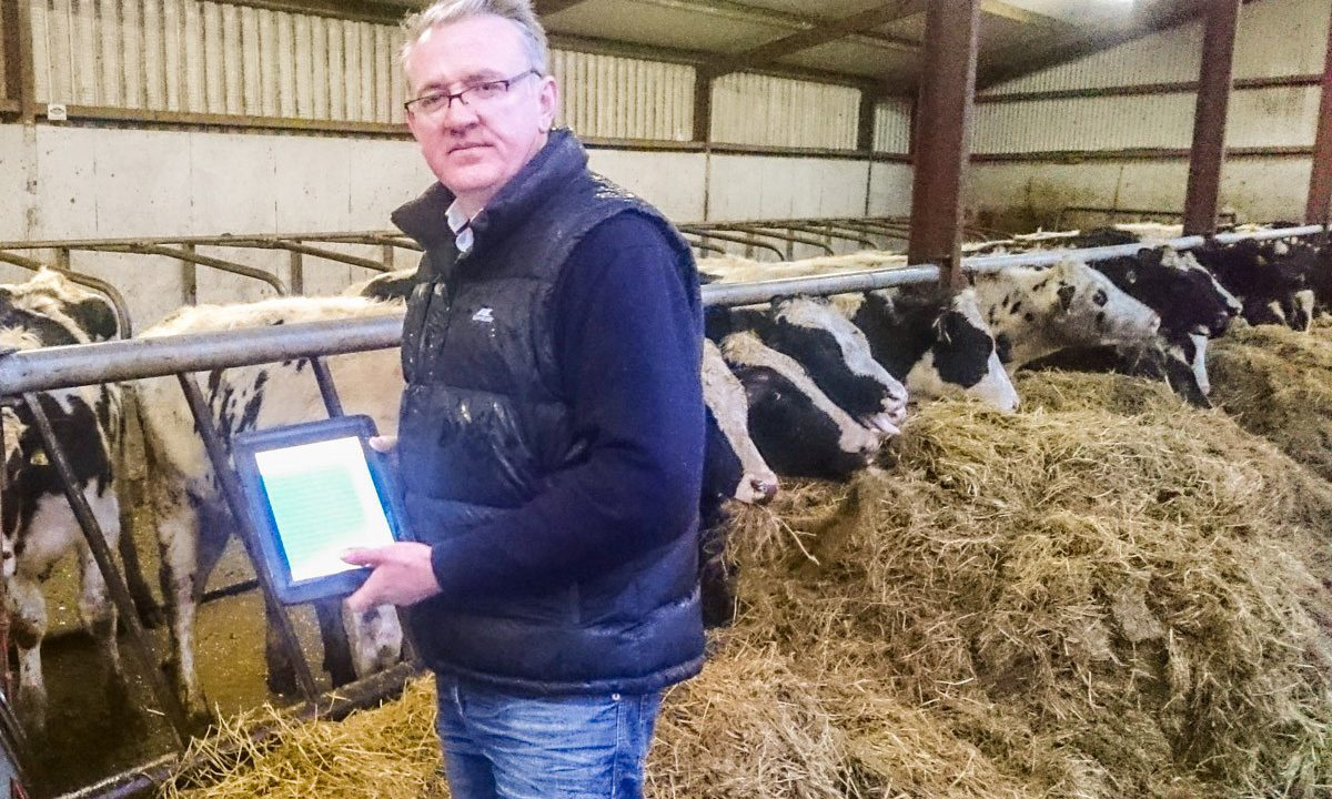How one farmer has his calves registered before the kettle boils