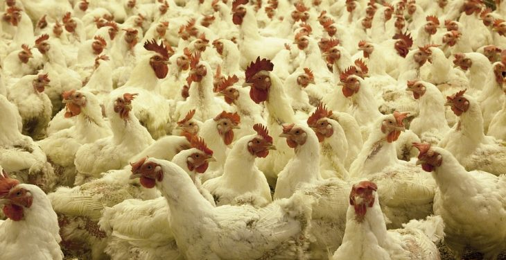 Planning permission for poultry shed granted after farmer wins appeal